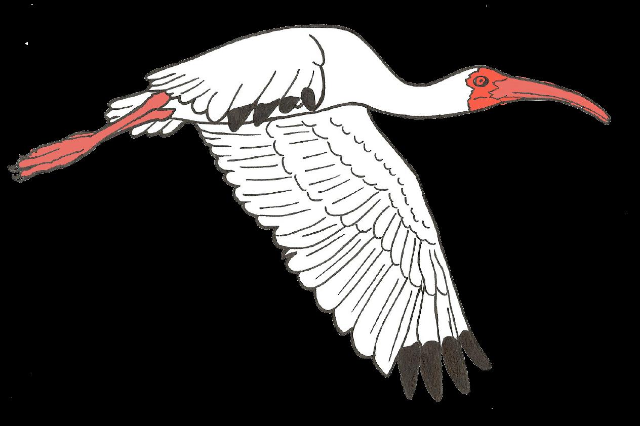 Orleans Audubon Society